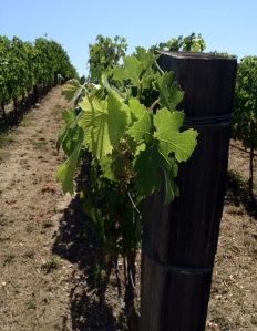 How Social Media is Like a Great Wine